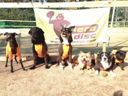 WFDG-Discdog-Team.JPG